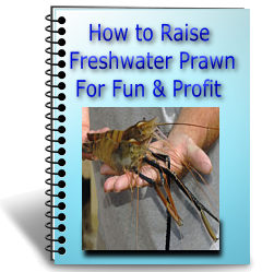 How to Raise Freshwater Prawn for Fun and Profit
